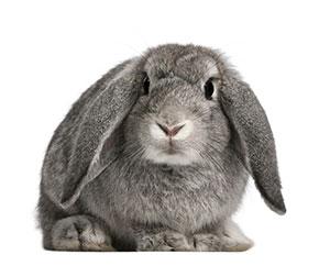 konijnen namen