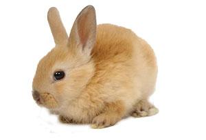 leuke konijnen namen