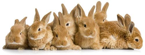 populaire konijnen namen